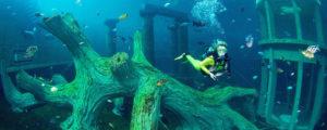 Plongée Belgique le 23-24 mars @ Belgique - Nemo et Todi